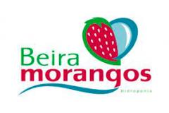 Beira Morangos